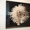 """Flying Mop"" by Tim Flach"
