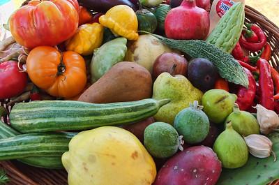 Harvest Feast Event - Morgan Hill