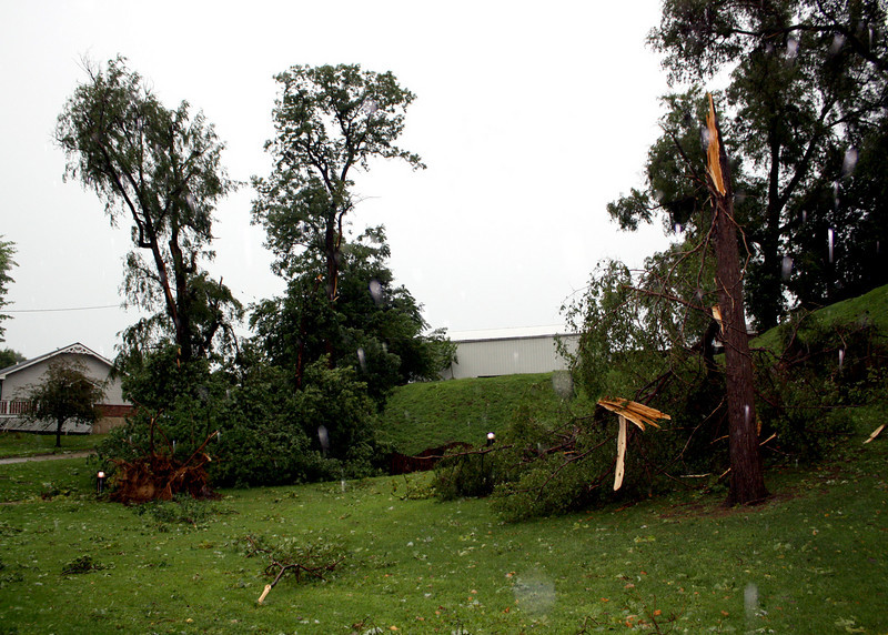 The tree on the left was uprooted by the wind.  The next photograph is a close-up of the its roots.