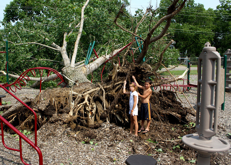 I had two of my grandchildren stand in front of the roots of this tree for size comparison.