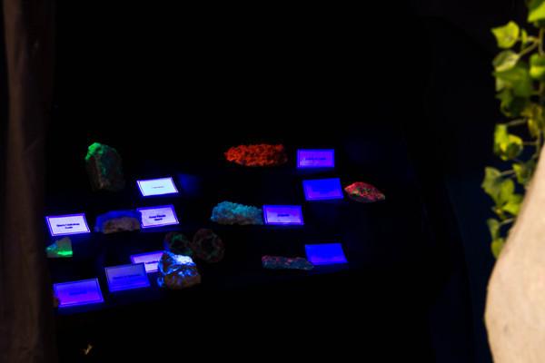 Minerals under blacklight display