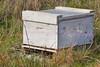 Honeybee hive box