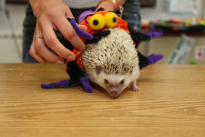 Hedgehog Fest '09 (10/10/2009)  Hedgehog Fest '09 at Norfolk County Agricultural High School - Costume Contest (10/10/2009)  Filename reference: 20091010-102536-HAH-Hedgehog_Fest_09