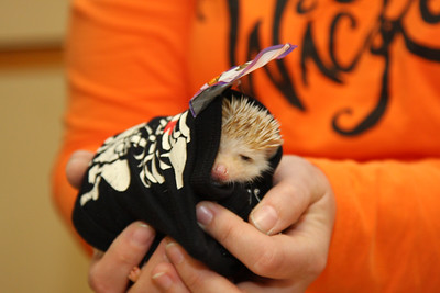 Hedgehog Fest '09 (10/10/2009)  Hedgehog Fest '09 at Norfolk County Agricultural High School - Costume Contest (10/10/2009)  Filename reference: 20091010-102420-HAH-Hedgehog_Fest_09