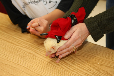 Hedgehog Fest '09 (10/10/2009)  Hedgehog Fest '09 at Norfolk County Agricultural High School - Costume Contest (10/10/2009)  Filename reference: 20091010-102527-HAH-Hedgehog_Fest_09