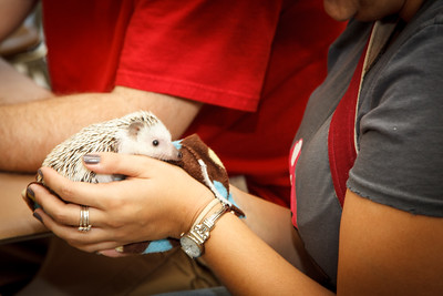 Hedgehog Fest '12 (10/06/2012) Hedgehog Fest '12 at Norfolk County Agricultural High School - Candids and General Cuteness (10/06/2012)