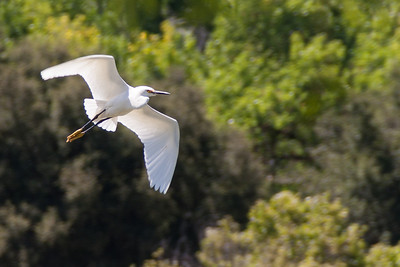 Snowy Egret greeted me as I arrived.