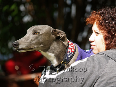 """""""Helping Hands for Hounds"""" fundraiser at """"For the """"Love of Dogs Day Care"""", (www.fortheloveofdogsdaycare.com) benefitting First State Greyhound Rescue, Inc. (www.firstgreys.org)"""