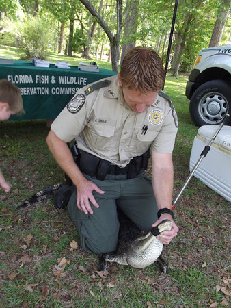 Florida Fish and Wildlife Conservation Commission showed off this two-year-old alligator they captured at a lake at PotashCorp in White Springs.