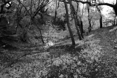 Around Los Altos Hills - April 2nd 2011