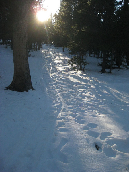 Cross country skiing in the woods