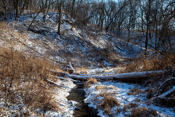 December 22, 2013, Fontenelle Forest