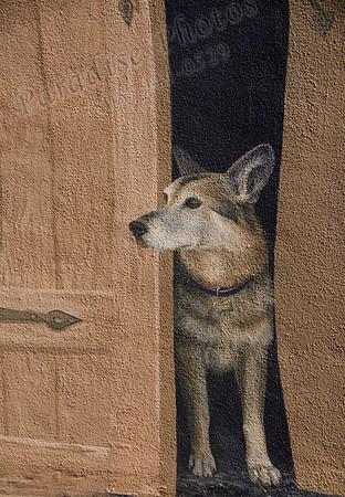 painted dog doorway3189