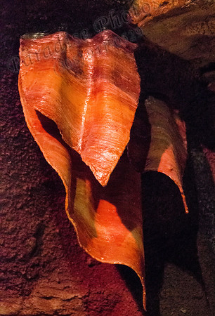 stalagmite leaf red 3131