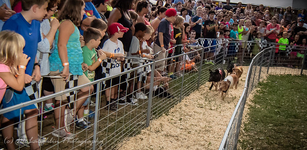 Hogway SpeedWay Hog Races