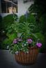 HT Garden Party 20120511-059