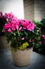 HT Flower Fest 20140509 040