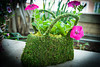 HT Flower Fest 20140509 027