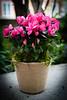 HT Flower Fest 20140509 041