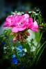 HT Flower Fest 20140509 046