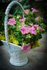 HT Flower Fest 20140509 032
