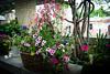 HT Flower Fest 20140509 031