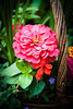 HT Flower Fest 20140509 036