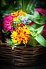 HT Flower Fest 20140509 037