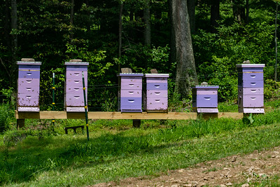 20190710 055 Hope Hill Lavender Farm, LLC
