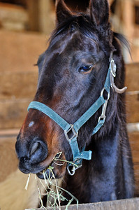 Glenn Hewitt - Horses 11-03-26_0251.jpg