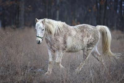 Glenn Hewitt - Horses 11-03-26_0277.jpg