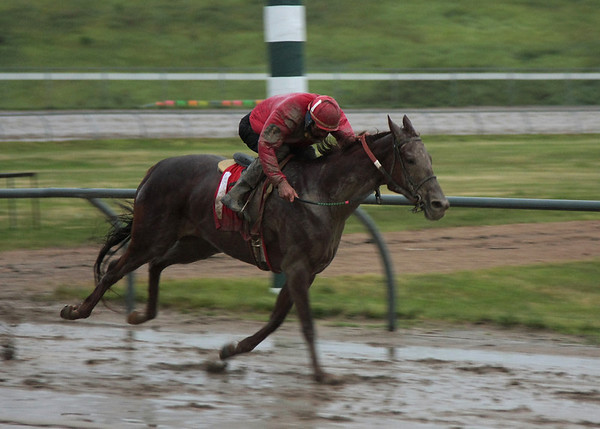 Horsemen's Park, 2008