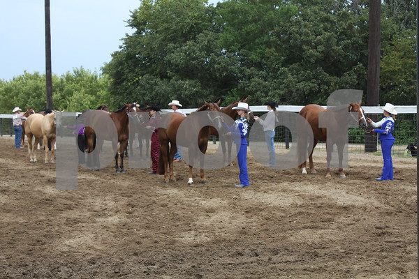 Group of 4 year old and older Geldings.