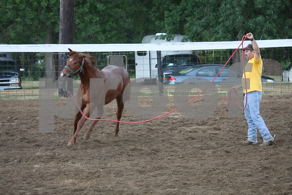 Scott Hildreth warming up his yearling before she's shown.