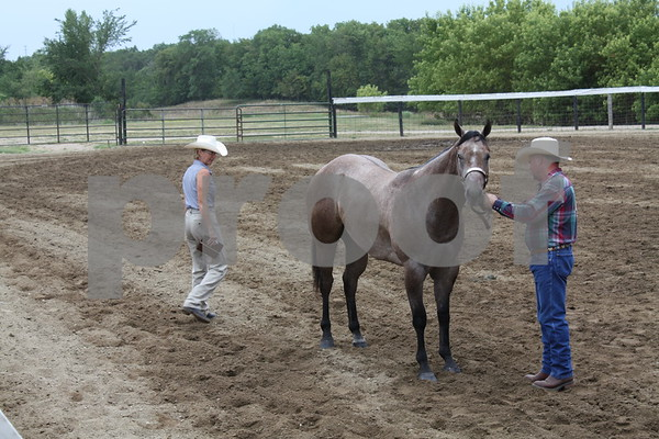 Gene Hicks shows his bay roan, Imagine Benji, to judge Darla Merwald.