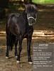 Latta Horses-4658