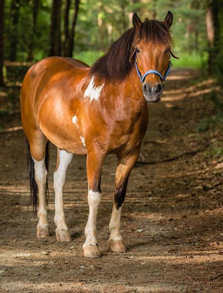 Latta Horses-5128