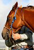 HIHS Horse Expo 2008