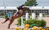 Amateur Junior Jumpers - Palm Beach International Equestrian Center 2010 FTI Winter Equestrian Festival