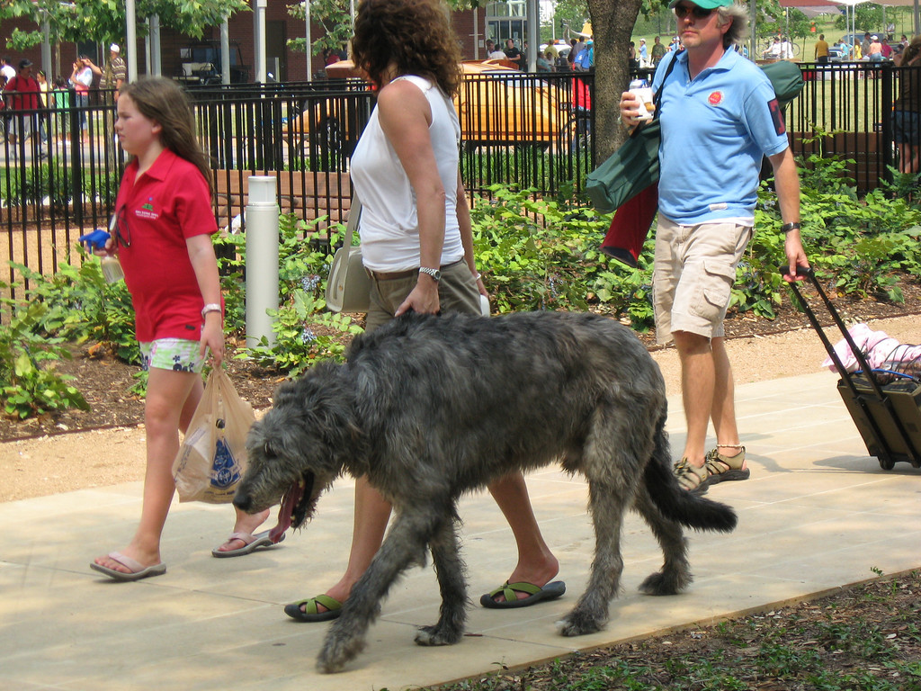 Giant dog in Discovery Green
