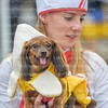 Lebanon Ohio Howl-O-Ween Pooch Pageant Photos