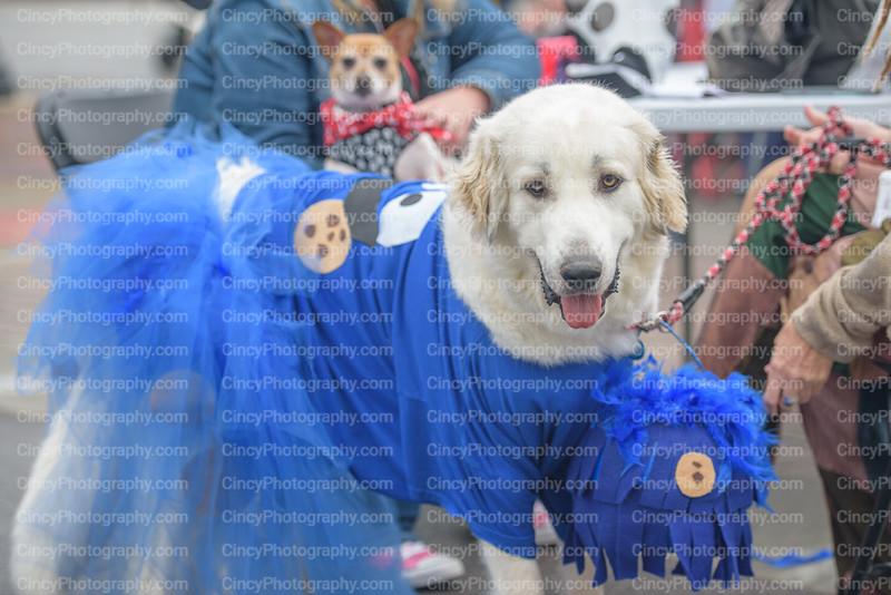 Lebanon Ohio Howl-O-Ween Pooch Pageant Photos