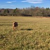 Saratoga Battlefield Pooka with stick Thanksgiving 2017