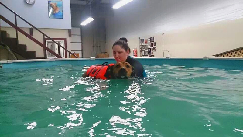 Lori & Becky Hyde, Bailey's Journey-Canine Swim Therapy Owners