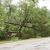 Block after block of downed power lines. Memorial Drive, Hurricane Ike aftermath.