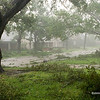 My first peek out the front door of the Longmount house, in the wake of Ike, Saturday morning Sept 14, 2008. The trees were a little worse for wear but they made it.