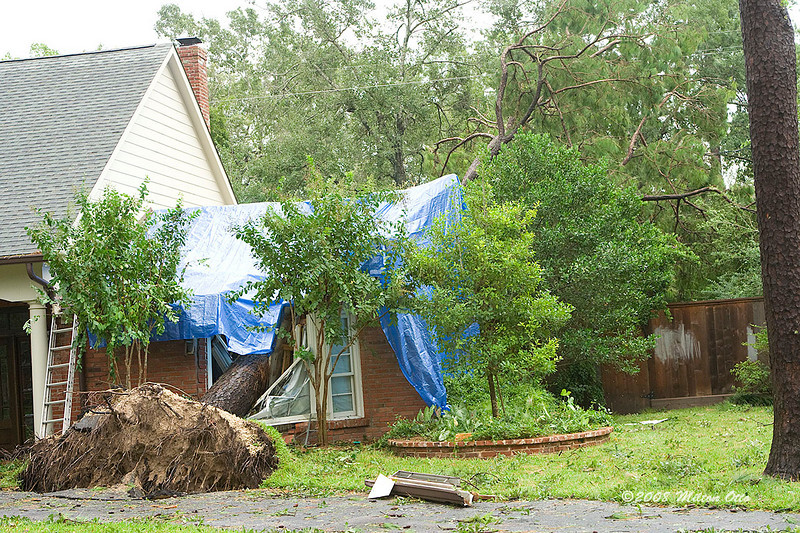 The story went that this guy's mother fled the coast to ride out the storm with her son in Houston. During the night a tree crashed thru her bedroom, landing at the foot of the bed.