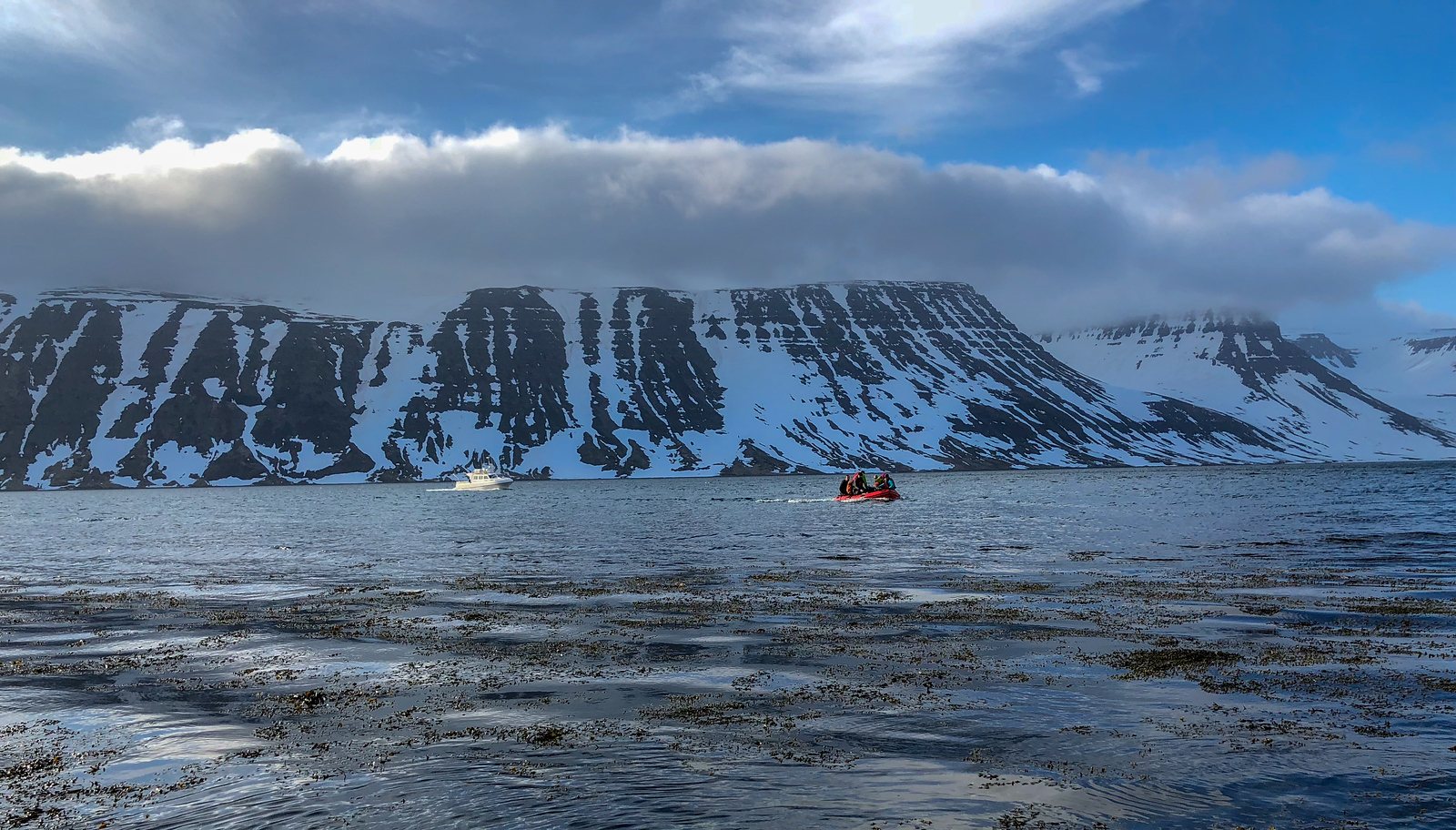 A novel-to-me ski approach: boat to zodiac. This became routine as the week went on. The background is typical of the Westfjords region - steep fjords with snow approaching sea level. Our local guide indicated that the snow level was low for this time of year - normally you can ski all the way to the ocean this time of year.