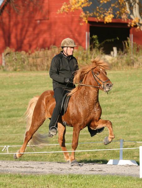 <h5>Heljar from Mill Farm</h5>