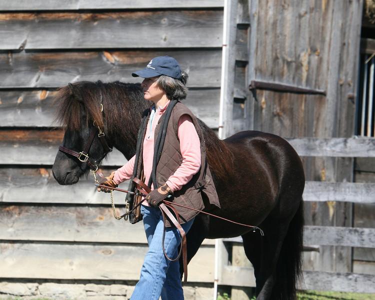 Loki from Bel Di <br> *Highest evaluated colt/stallion*